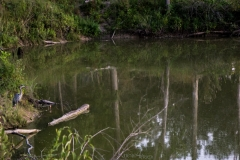 Amid the Marsh
