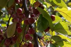 Berry Beautiful Day
