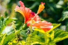 Buzzing Botanicals
