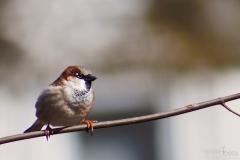 Follow the Birdy