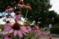 Pink Park Centerpiece