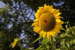 Simmering Sunshine