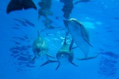 Dancing Divers