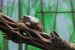 Holy Tree Frog