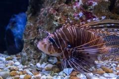 Mane Fish Lips