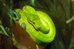 Pretty Python